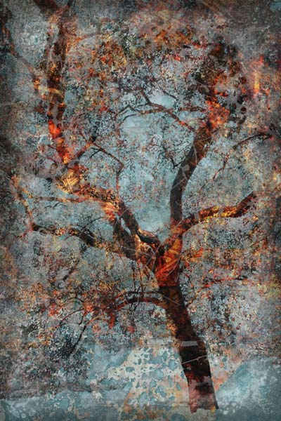Digital collage of tree and texture