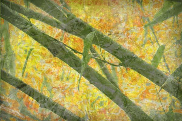 Digital collage art by Liz Ruest