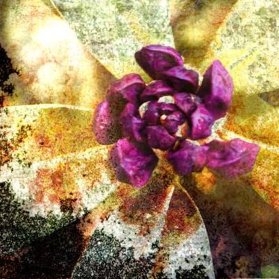 Sleepy: Digital collage © 2012 Liz Ruest