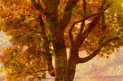 by my window: Digital collage, 12 layers © 2018 Liz Ruest