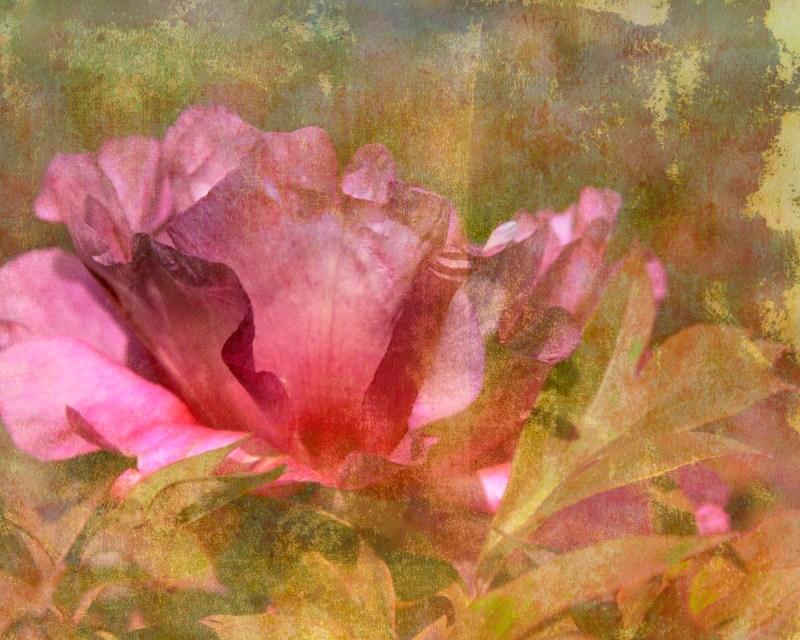 receptive: Digital collage, 11 layers  © 2020 Liz Ruest