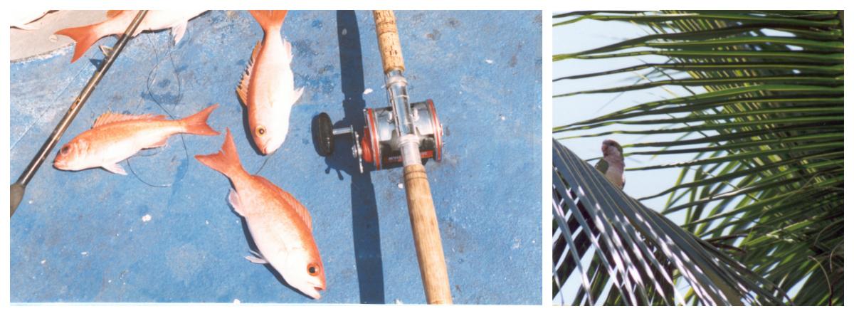 Bahamas 1995 fishing collage