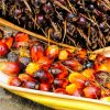 why we should not use palm oil