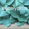 eucalyptus for coughs and colds