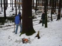 Maibaum Umschneiden 12.02.2005 - 06