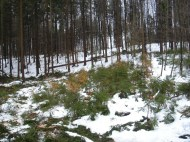 Maibaum Umschneiden 12.02.2005 - 36