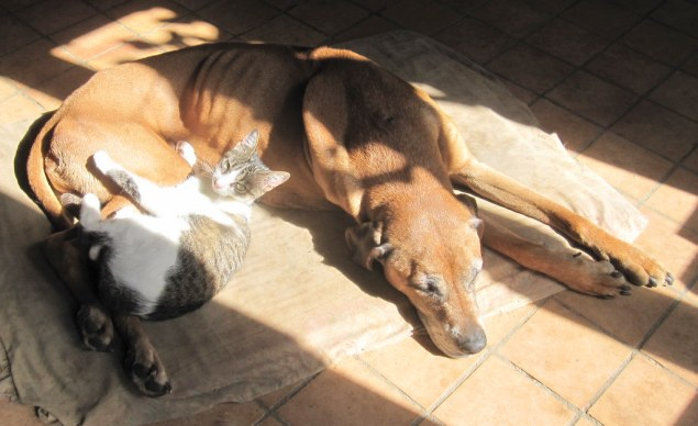 Max lies in the sun with Min