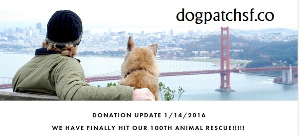 dogpatch San Fransisco dog leads for animal rescue