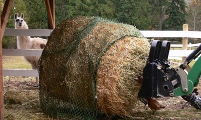 slow feeder net, nag bags, round bales feeding llamas and alpacas