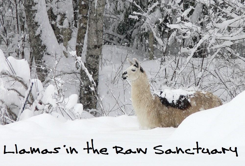 A Llama's Perspective