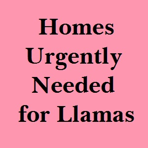 homes wanted for llamas in Canada