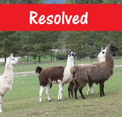 successful re-homing by The Llama Sanctuary of unwanted llamas