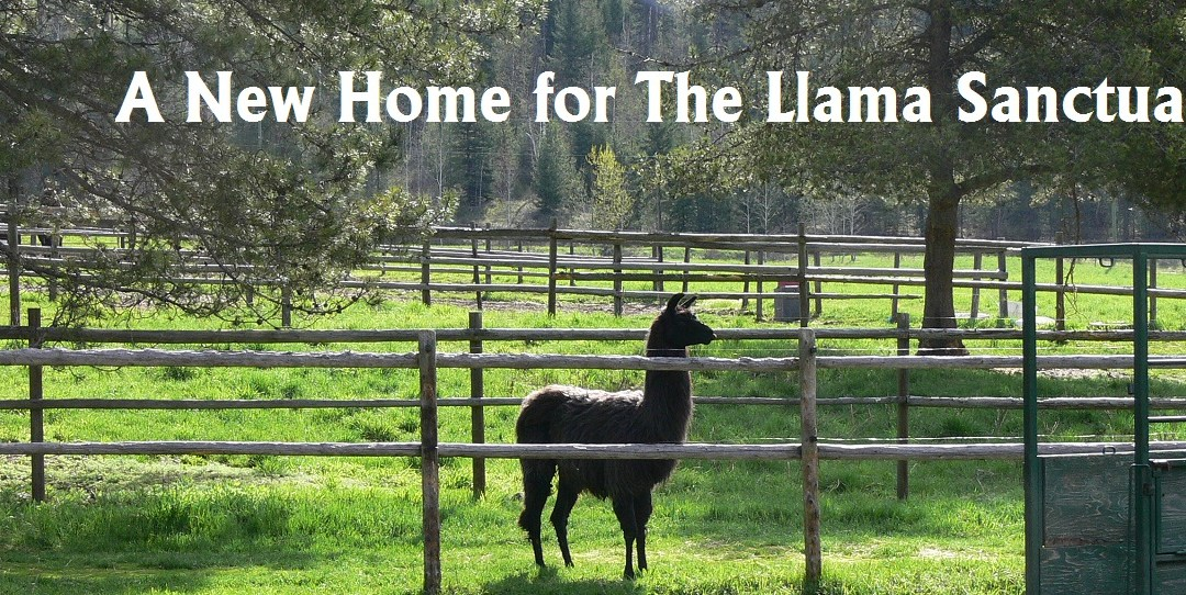 New Home for The Llama Sanctuary