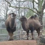 Dainty and Tiggy at London Zoo