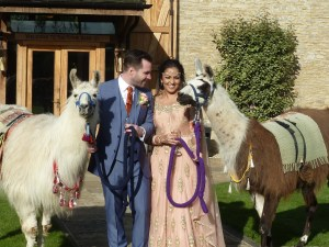 Tim and Saba's wedding day with llamas