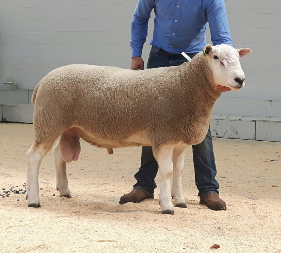 Brightonhouse Godfather-Carlisle 2018- 2000gns, Sold To D.Mullan.