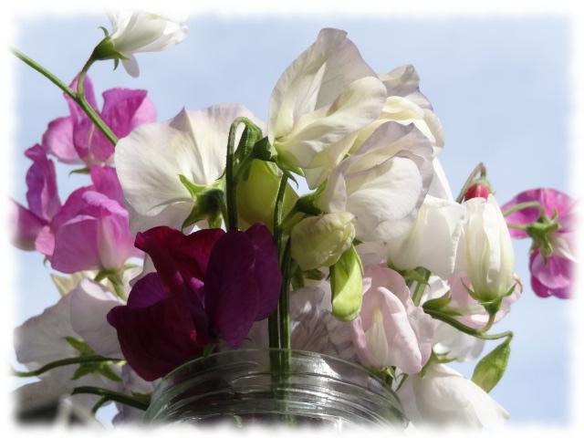 sep1flowers