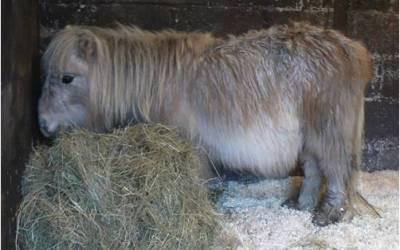 A Tale of Two Ponies…Frank and Godfrey