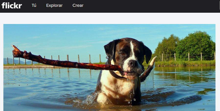 Una fotografía como parte de la gaelría de imágenes la página principal de Flickr