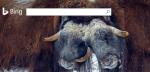 Buscadores alternativos a Google | 2: Bing, búsqueda multimedia y personalización