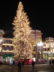 Tree in Piazza Duomo