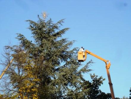 Tree trimming in Verona