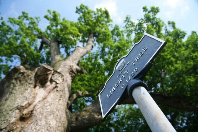 Liberty Tree, Randolph NJ