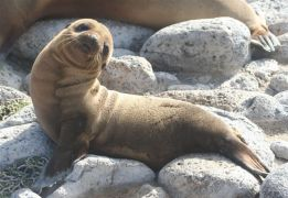 Day 3 Sea Lions_27
