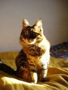 Jaffa the Cat