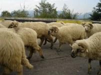 Romanian Countryside_2
