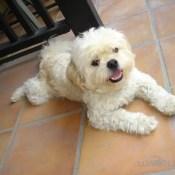 Dog Sitting Hollywood