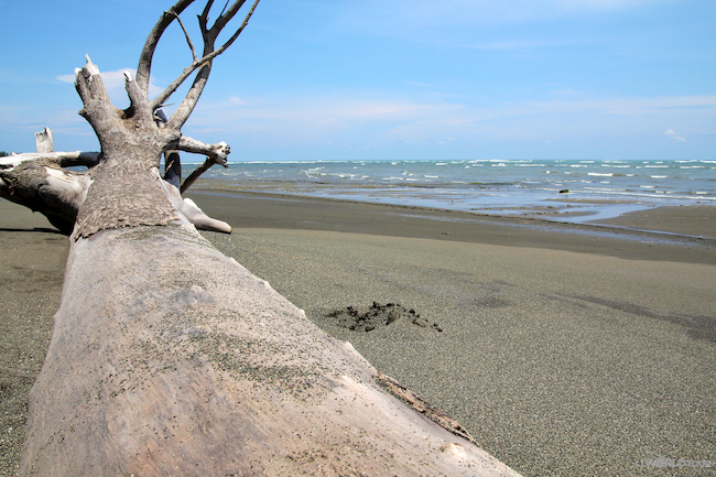 Beach at Corcovado