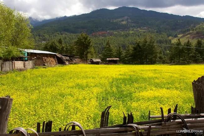 Field of Flowers Bhutan