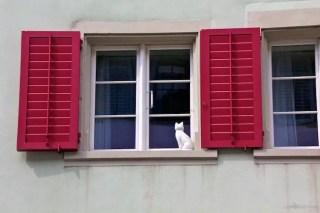 Kitty in the Window
