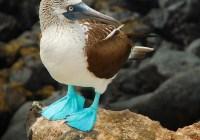 Countdown to the Galapagos Sweepstakes!