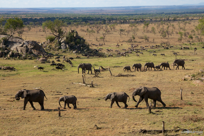Four Seasons Serengeti Elephants