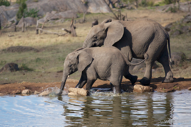 Four Seasons Serengeti