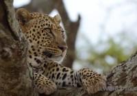 Video: Tanzania on Safari