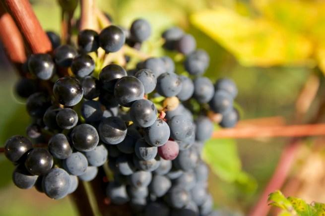 Pfalz Vineyards