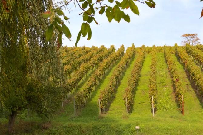Pfalz Wine region