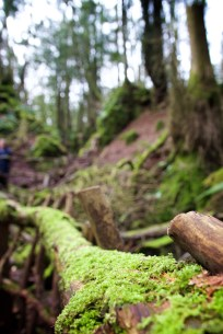 Forest of Dean8