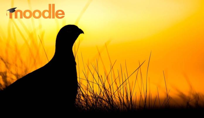 Developers, Join The Exclusive 'Early Bird' Club, Ensure Moodle 3.3 Plugin Compatibility