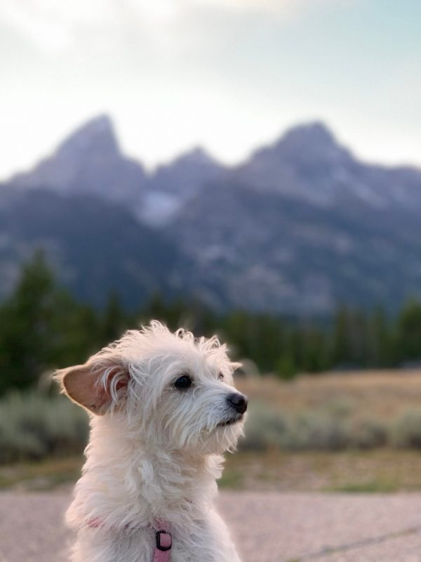lucille amongst the tetons