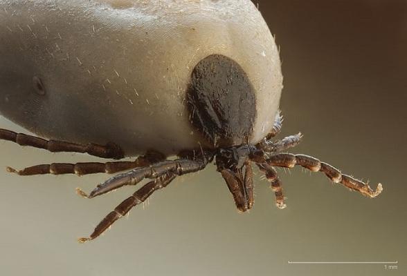 OPREZ: Invazija komaraca i krpelja na levoj obali