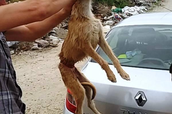 Psu zavezao žicu oko stomaka i bacio ga na divlju deponiju  - 2015