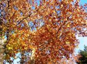 Jesen u Borci - 2015