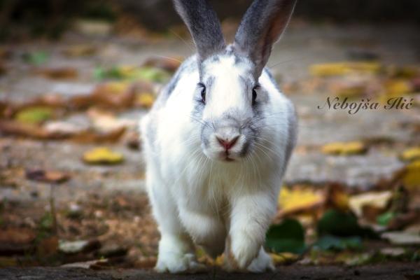 Nebojsa Ilic Photography - Slika 06 - Zeka u dvoristu