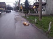 Trovanje pasa u Borči, LOBI