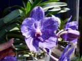 Krnjača poznata po Vladinim orhidejama