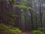 Šumski pojas